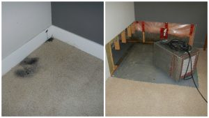 Mould Mold Removal and Remediattion