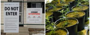 Crime Stoppers Sign Calgary Marijuana Grow House Remediation Services