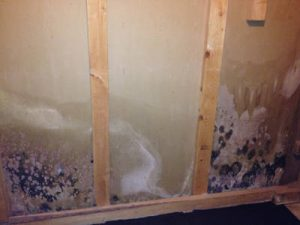 Cleaning up mold in a home