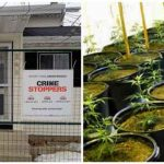 Is a Remediated Grow-Op Home Really Safe