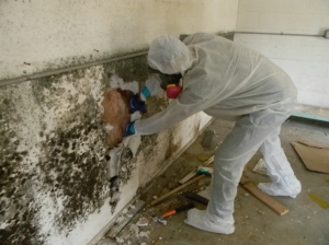 Technician in PPE removing drywall covered with mold