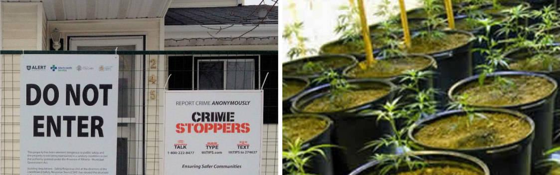Grow Op plants and hazard signs
